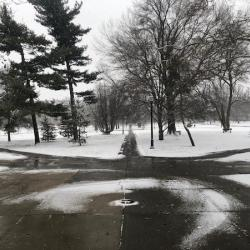 Snow on the Oval
