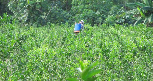 Farmer spraying coca fields in Chapare, Bolivia by Zoe Pearson