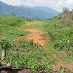 deforestation in central america